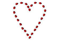 Row of ladybugs forms a heart shape Stock Images