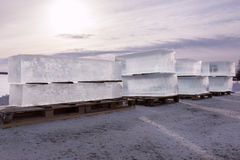 Row of large ice cubes piled on wooden pallets Royalty Free Stock Photo