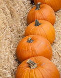 Row of large ripe orange pumpkins Royalty Free Stock Image
