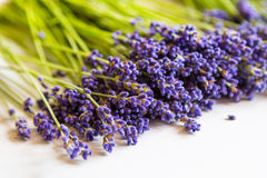 Row of lavender flowers on white background Stock Photo