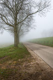 Row of leafless trees in the mist Stock Image