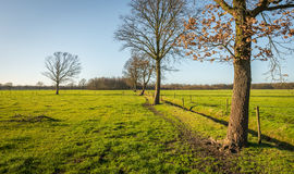 Row of leafless trees on a sunny day in winter Stock Images