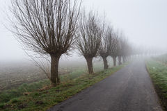 Row of leafless willows beside a country road stock image
