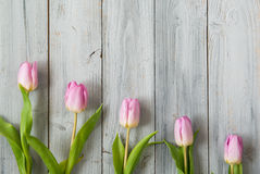 Row of light pink tulips on grey wooden background, top view Stock Photo