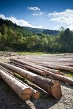 A row of logs lying on the ground Royalty Free Stock Image