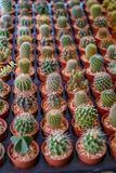 Row of lovely small cactus with varieties of plant form in brown plant pot with pebble selling in garden decoration market. Selective focus, Thailand stock image
