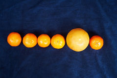 Row of mandarines and an orange Royalty Free Stock Photography