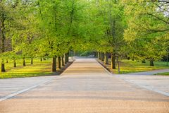 Row of maple trees in spring time with pedestrian walkway. Row of maple trees in spring time with pedestrian walkway stock photography