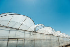 Row of melon greenhouse with blue sky.  Stock Photo