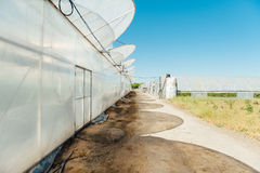 Row of melon greenhouse with blue sky.  Royalty Free Stock Photography