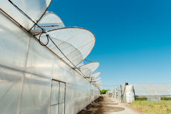 Row of melon greenhouse with blue sky.  Stock Photography
