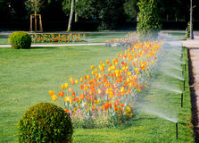 Row of modern sprinkler irrigation system working in the morning Royalty Free Stock Image