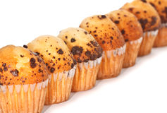 Row of Muffins. Diagonal row of muffins with chocolate chips. With space to write a text Stock Photography