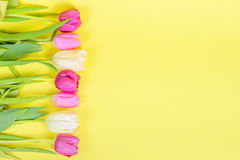 Row of multicolored tulips for border or frame Royalty Free Stock Images