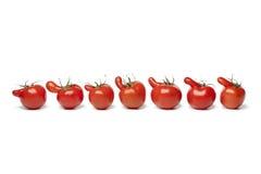 Row of nosy tomatoes Stock Image