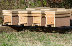 Row of nucleus honey bee hives. New honey bee nucleus hives in an apiary in late afternoon sunshine in spring, ready for sale royalty free stock images