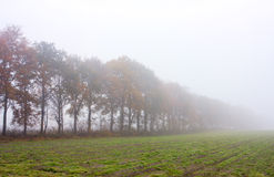 Row of oaks in mist Royalty Free Stock Images