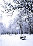 Row Of Benches Covered In Powdery Soft Snow Stock Photos
