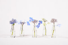 Row Of Blue Flowers In Glass Jars, Cycle From Bloom To Wither Stock Image