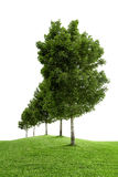 Row Of Green Trees Royalty Free Stock Photography