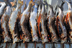 Row Of Grilled Brown Trouts Royalty Free Stock Photos