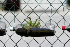 Free Row Of Homemade Flower Pots Made From Recycled Plastic Bottles With Wet Soil And Moss Rose Or Portulaca Grandiflora Annual Plants Stock Photos - 164565123