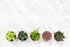 Free Row Of Mini Succulent Plants On Marble Surface Stock Photo - 143374350
