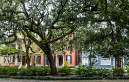 Free Row Of Old Houses Beyond Oak Trees Royalty Free Stock Images - 67036149