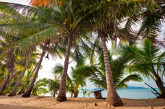 Free Row Of Palms Royalty Free Stock Images - 14873139