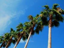 Free Row Of Palms Stock Photo - 3072760