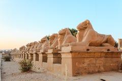 Row Of Ram-headed Sphinxes Royalty Free Stock Photos