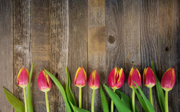 Free Row Of Tulips On Wood Royalty Free Stock Photo - 83633745