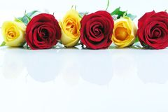 Row Of Yellow And Red Roses Stock Images