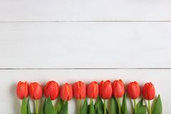 Orange tulips displayed on a white background Royalty Free Stock Images