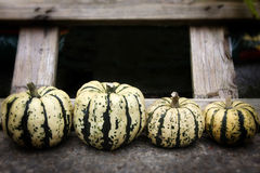 Row of organic pumpkins Stock Photography