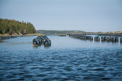 Row of oyster traps Stock Photos