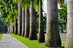 Row of palm tree. S in the parks Royalty Free Stock Images