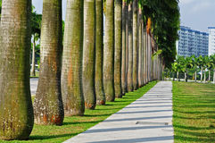 Row of palm tree in the park Stock Photo