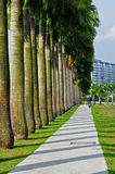 Row of palm tree in the park. S Stock Image