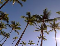 A row of palm trees. On the beach Stock Images