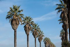 Row of Palm Trees Stock Photos