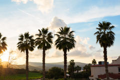 Row of palm trees against setting sun and mountains Royalty Free Stock Photo