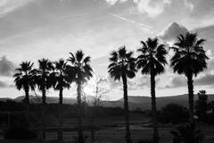 Row of palm trees against setting sun and mountains Stock Images