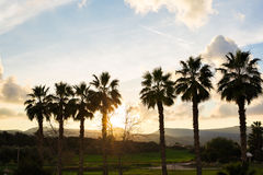 Row of palm trees against setting sun and mountains Royalty Free Stock Image
