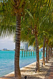 Row of palm trees along waterway in Miami Beach, Florida. Royalty Free Stock Images