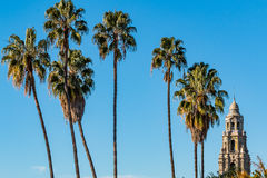 Row of Palm Trees By California Tower in Balboa Park Royalty Free Stock Images