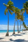 Row of Palm Trees on caribbean beach in Cap Cana. Dominican Republic Stock Photos
