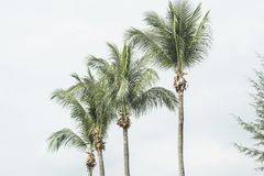Row of palm trees. Row of green palm trees over empty sky Stock Images
