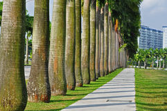 Row of palm trees in the park Stock Image