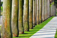 Row of palm trees in the park Royalty Free Stock Images
